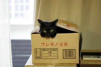 hikkoshi_