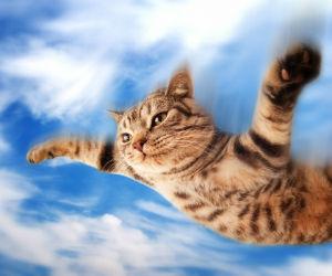 new_flying-cat