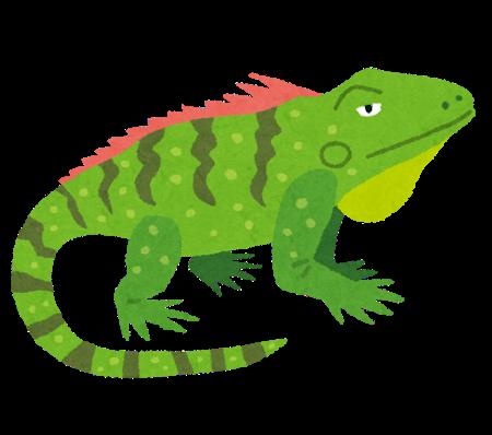 animal_iguana.png